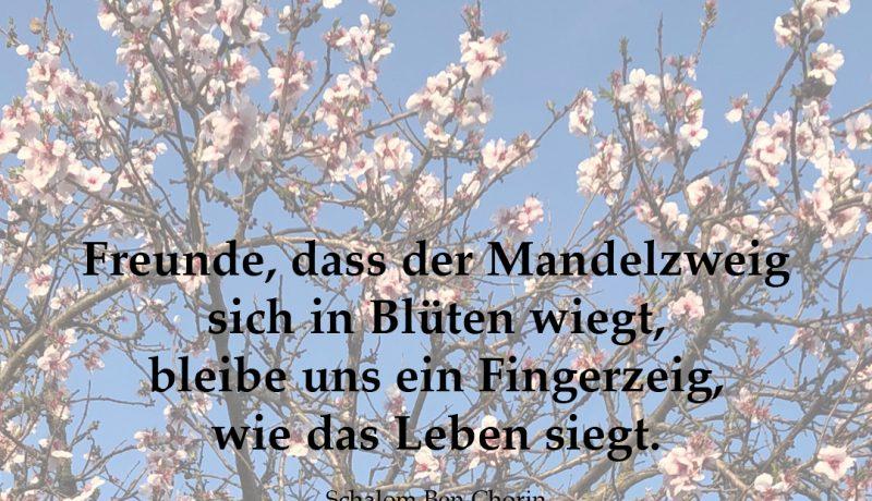 mandelzweig_insta